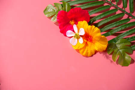 Artificial hibiscus flowers and leaves on pink background.
