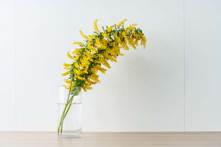 Bouquet of yellow mimosa flowers in a vase.