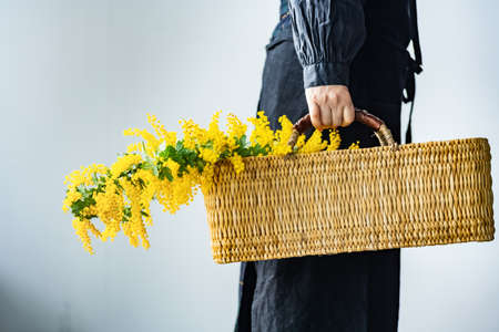 Woman holding bouquet of mimosa in the basket.