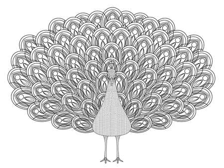 hand drawn peacock coloring page in exquisite style Illustration