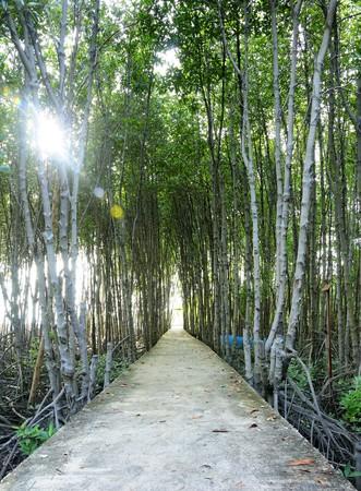 bosque de manglar, bosque en la desembocadura de un r�o, el bosque de manglar de footbrige en Tailandia, la pasarela en bosques de mangle de Tailandia  Foto de archivo - 8088563