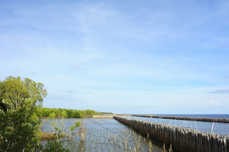 mangrove forest: mangrove forest, forest at the estuary of a river, mangrove forest in Thailand