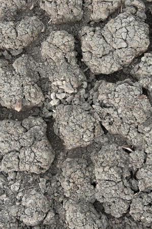 parched: Ground parched by drought