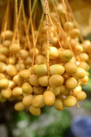 Date palm yellow fruit On a blurred background