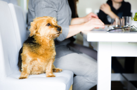 paw smart: dog sitting at the office conference table