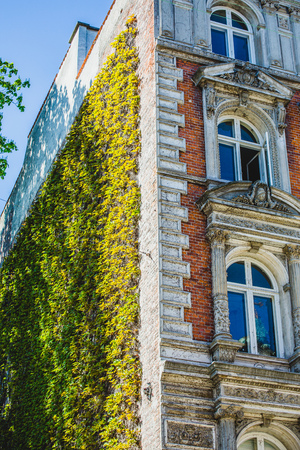 front house: front of magnificent house overgrown with ivy vines