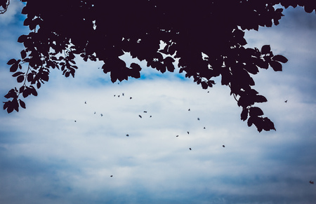 gnat: swarm of mosquitoes under a tree in summer