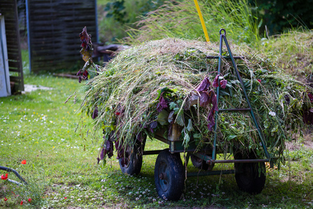 warmia: Haymaking at autumn in own garden with haystack