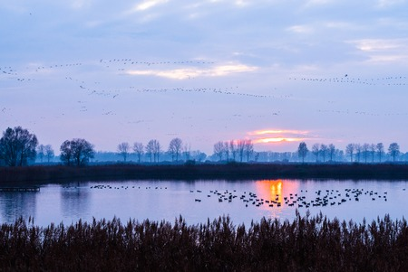 groupings: migratory birds at beautiful sunset with lake and blue hour atmosphere Stock Photo