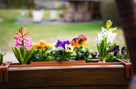 mixed colorful Spring flowers on the balcony