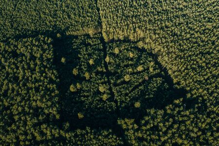 wideangle aerial drone photo with panorama of the forest of Grunheide, Berlin-Brandenburg place for the new Tesla Gigafactory Europe