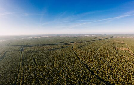 drone photo of the forest of Brandenburg, Germany