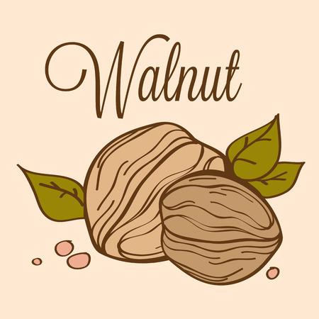 hard crust: hand drawn vector illustration of walnut on light background