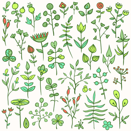 Set of 40 hand-drawn floral elements. Different flowers, leafs, berries, and other nature elements. Vector