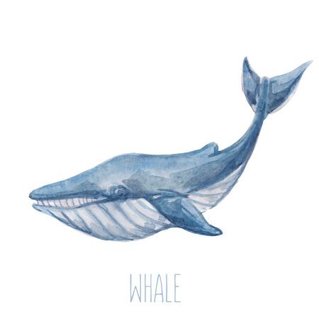 귀여운 수채화 푸른 고래 벡터 일러스트 레이 션.