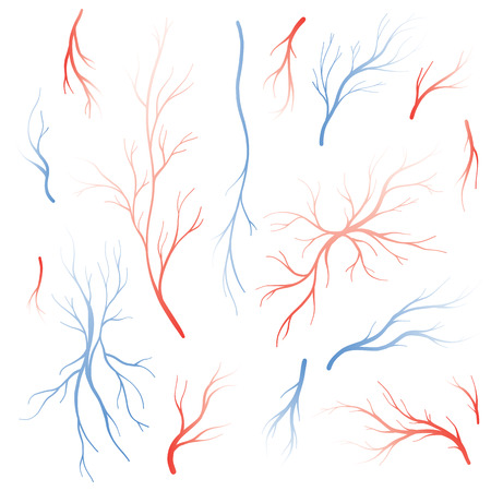 arterial: Human eye veins and arteries,  red blood vessels. Blood system vector set, blood veins isolated on white background. Illustration