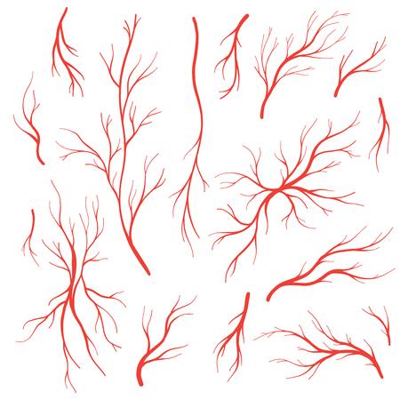 Venas y arterias del ojo humano, vasos sanguíneos rojos. Conjunto de vector del sistema de sangre, venas de sangre aisladas sobre fondo blanco.