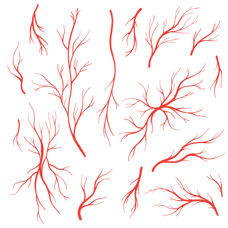 Human eye veins and arteries,  red blood vessels. Blood system vector set, blood veins isolated on white background. Vettoriali