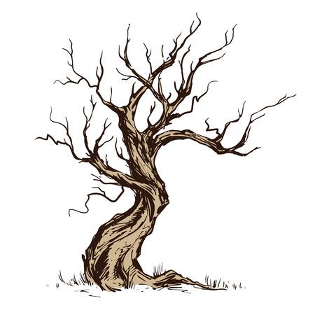 Handsketched Abbildung des alten gekrümmten Baums. Trockenes Holz, Zunder. Tintenskizze laubwechselndes Oaktree lokalisiert auf weißem Hintergrund. Freihändige lineare Hand gezeichnete Retro- Gekritzel-Grafikart des Bildes. Vintage Vektor Baum. Vektorgrafik
