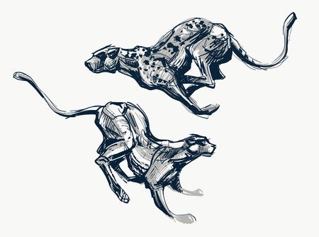 실행중인 치타 빠른 잉크 스케치, 벡터 일러스트 레이 션. 야생 고양이, 표범, 팬더, 재규어 속도감.