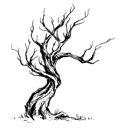 Hand sketched illustration of old crooked tree. Dry wood, ink sketch deciduous oak tree isolated on white background. Freehand linear hand drawn picture retro doodle graphic style vintage vector tree.