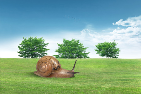 lawn grass: Snail on the grassland.