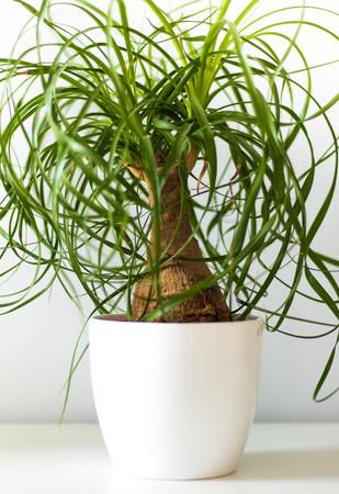 Cosy green houseplant in white vase Stock Photo