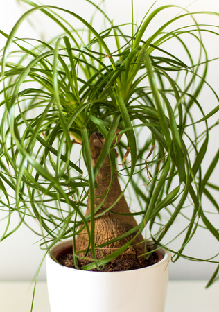 Small green plant in white vase Stock Photo