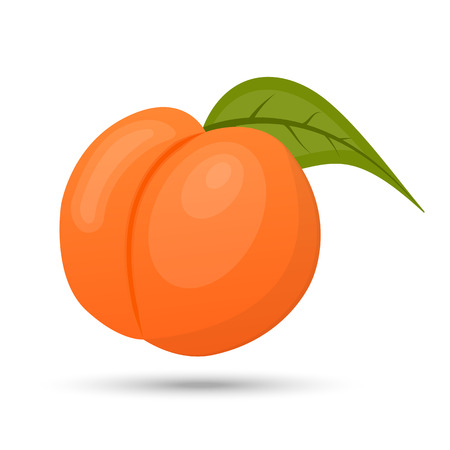 vector peach on white background