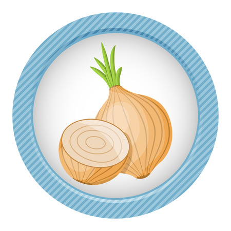 pungent: vector illustration of onion an a white background