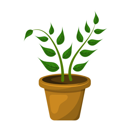 pic  picture: Indoor plant colorful icon. Vector illustration in cartoon style