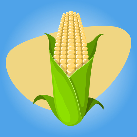 corncob: Corncob vector illustration. Vector illustration in cartoon style Illustration