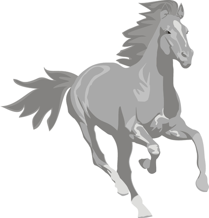 illustration  Prancing grey horse Vector