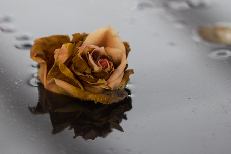 Roseblossom in the water