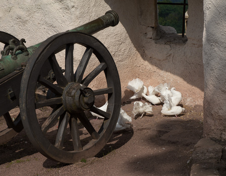 Pigeons and cannon