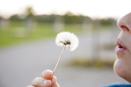 A woman holding a dandelion, dandelion in his hand and blows away the seeds. photo