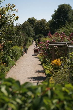 allotment: way in a allotment. access garden via walk way. Stock Photo