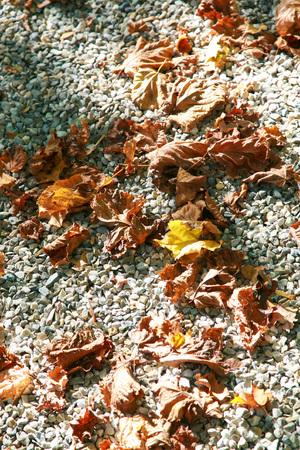autum: autum leaves on pebble stones in the park.