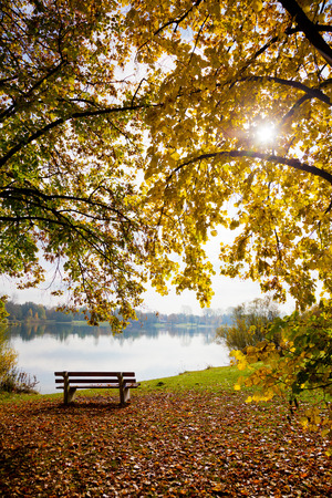 empty bench: Empty bench in fall at a lake under a tree with fallen leaves. Stock Photo
