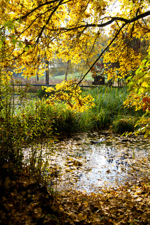 biotope: biotope in autumn with a pond with fallen leaves. Stock Photo