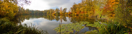 mirroring: Panorama of autumn trees reflecting and mirroring in a lake