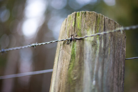 barbed wire fence: barbed wire fence in a forest on a wood pole.