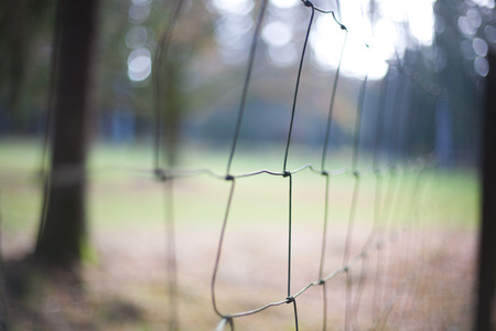 chainlink fence: chainlink fence in a forest. Green border. Refugee barrier. Stock Photo