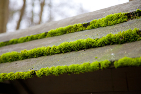 wooden roof with moss.