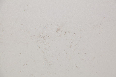 humid: Mold in the bathroom shower on the ceiling and tiles. Stock Photo
