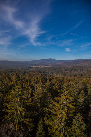 without: View over bavarian wood national park in winter without snow.