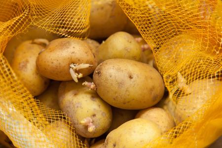 potatoe: Sprouting potatoes in a orange potatoe sack.