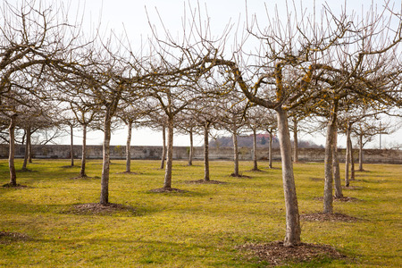tree leaves: Apple trees in spring without leaves in a park in germany, bavaria. Stock Photo