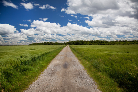 on the lonely road: Barley field with blue sky and lonely road.