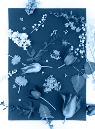 beautiful spring flowers on blue background top view pattern flat lay